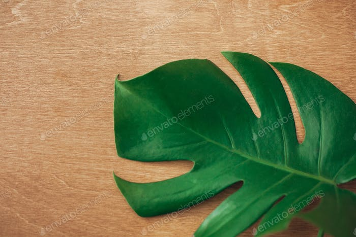 Green monstera leaf on rustic wood, top view with copy space
