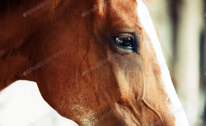 Picture of beautiful horse with head isolated