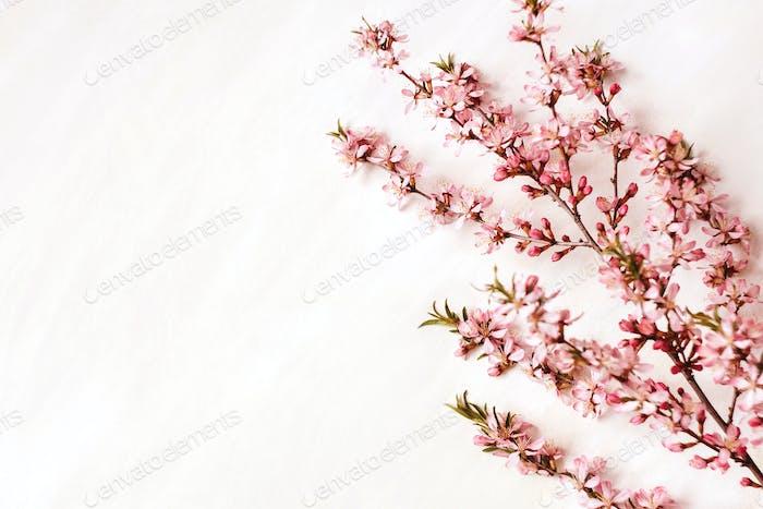 Zweig der Mandel auf Weiß.