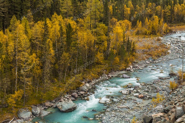 Beautiful landscape with a view of a mountain stream in the fall.