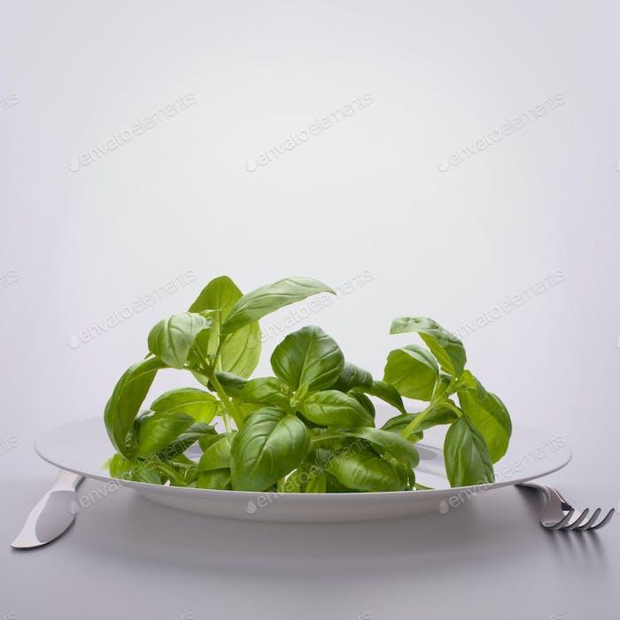 Sweet basil leaves on plate.