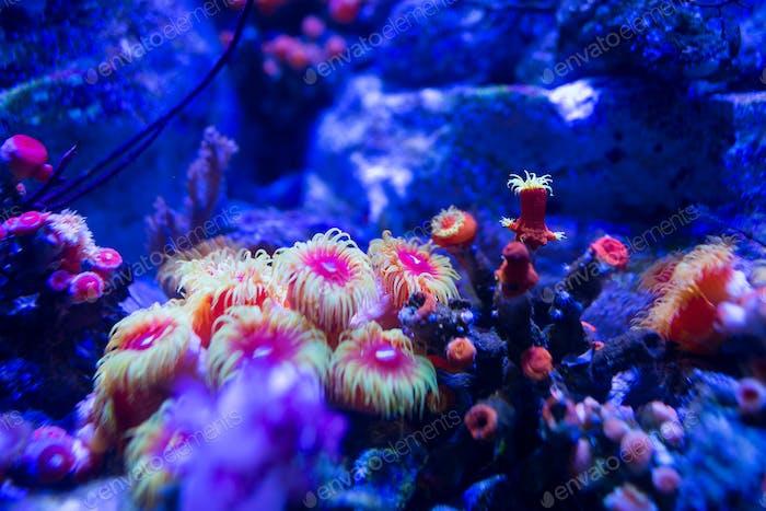 Aquarium Korallen