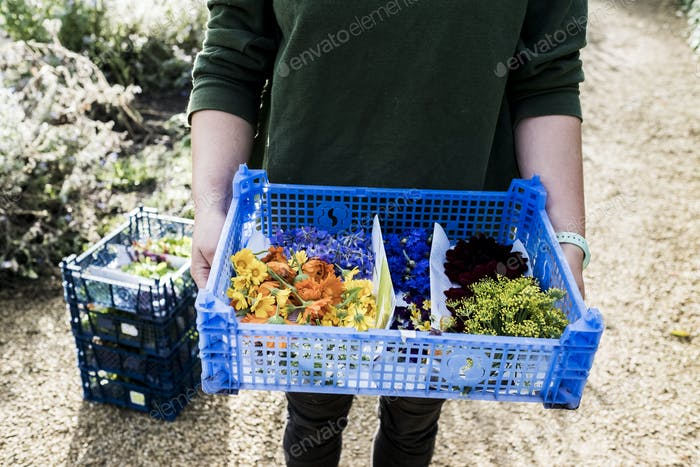 High angle close up of person standing outdoors, holding blue plastic crate with a selection of
