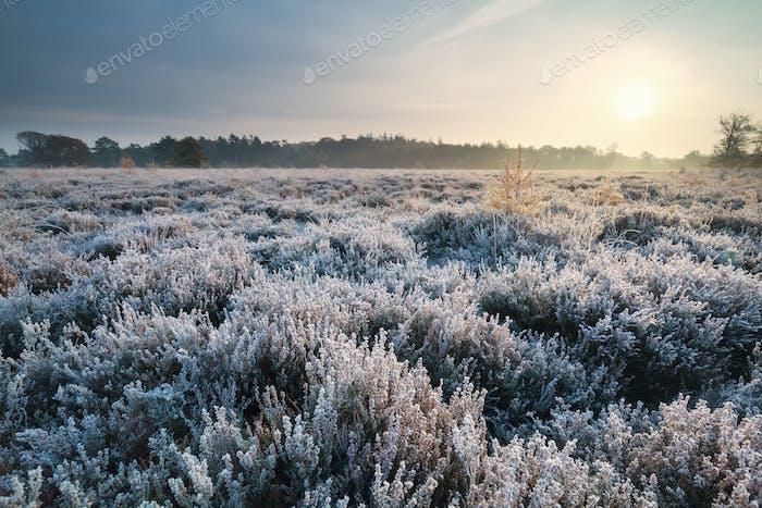 sunrise over heathland during frosty morning