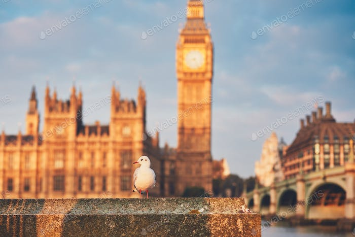 Seagull against Houses of Parliament