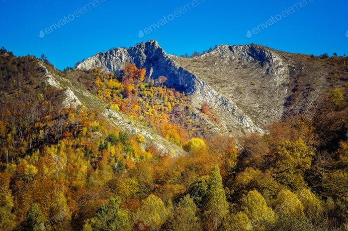 Colorful autumn forest landscape in the mountains