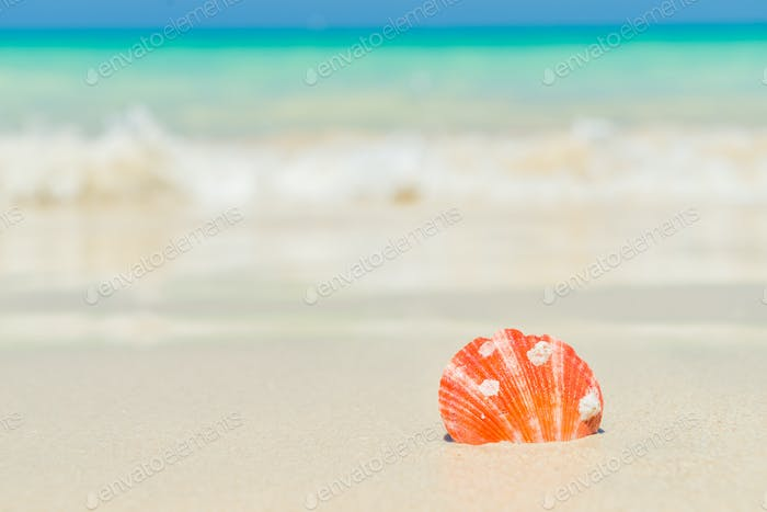 Muschel am Strand