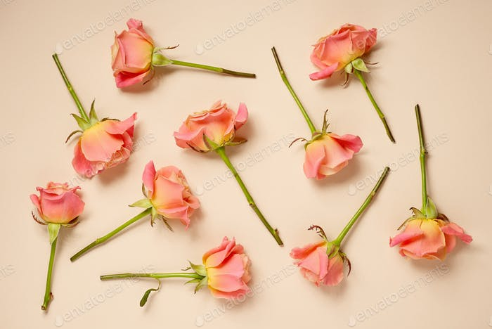 pink roses on beige background