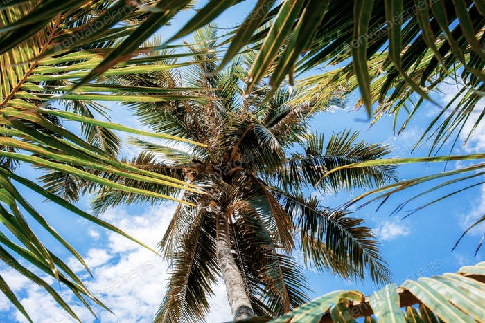 Palm and leaves at sky