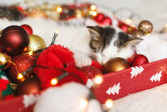 Adorable kitten sleeping on cozy santa hat with red and gold baubles in festive lights