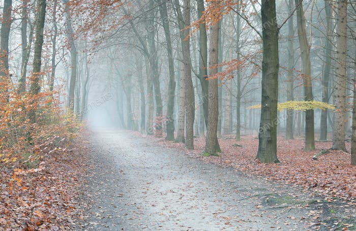 path in misty autumn forest