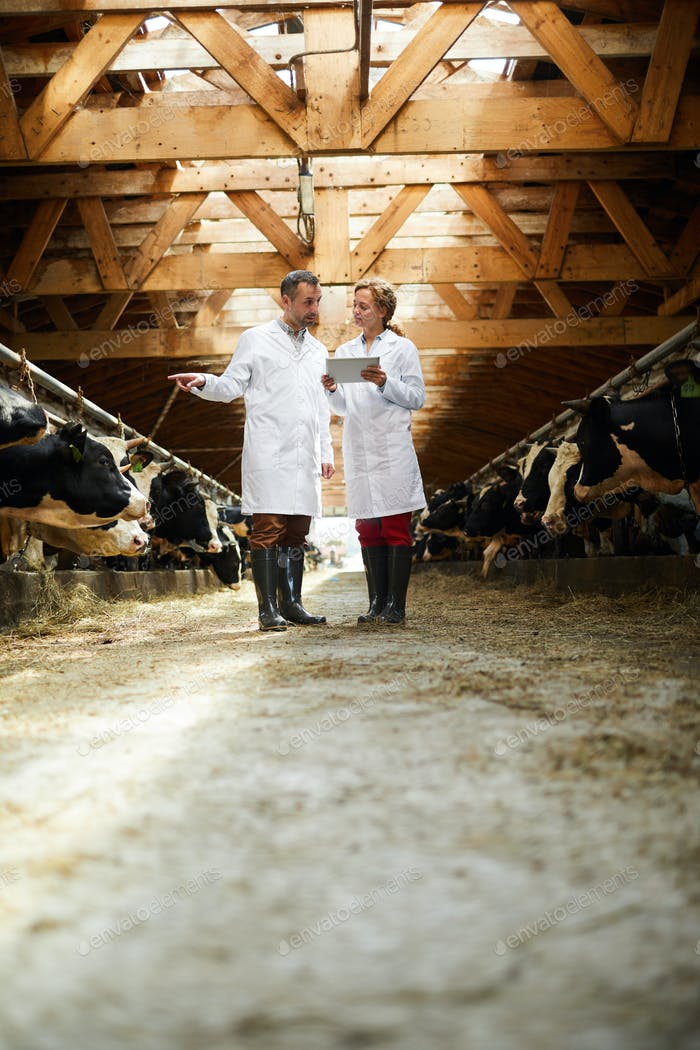 Two Veterinarian at Farm