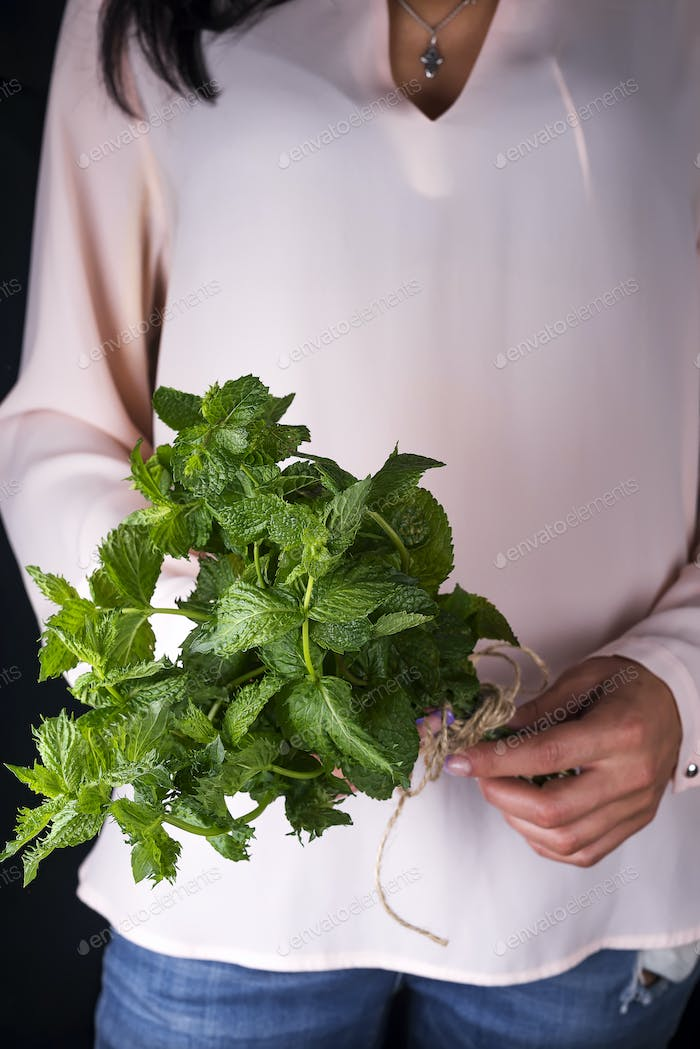fresh grow bunch green organic mint leaf plant harvest in hand