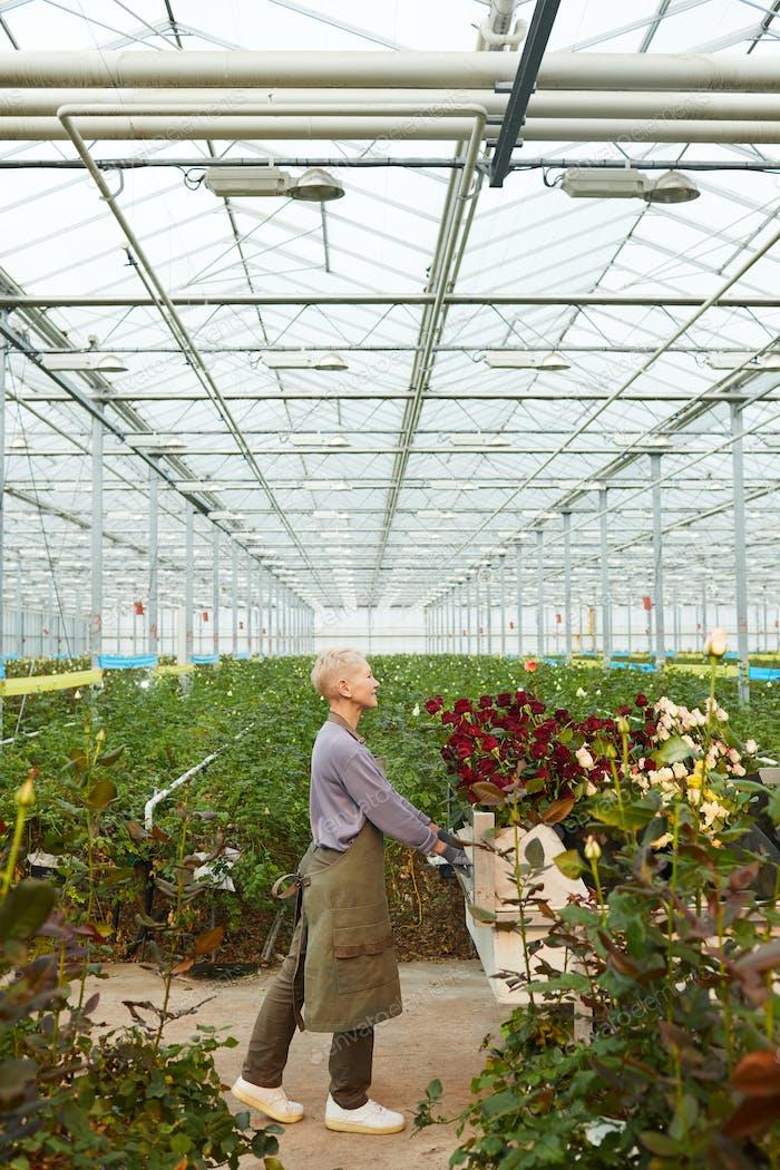Gärtner arbeiten mit Blumen