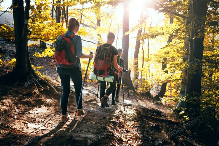 Trekking with backpacks on forest trail, group of tourists