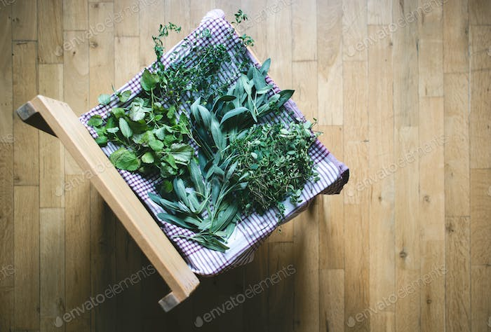 Drying freshly harvested herbs at home