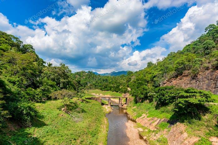 Landscape of bridge over river in jungle
