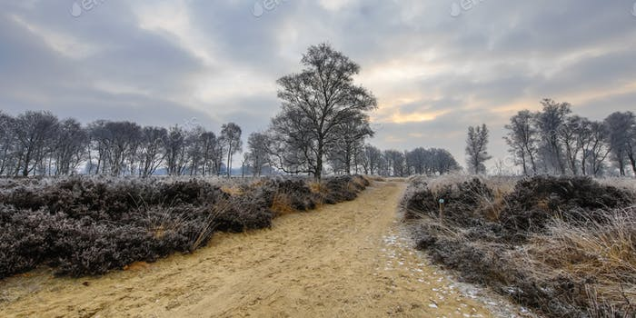 Winter sunrise over trail through frosty heathland