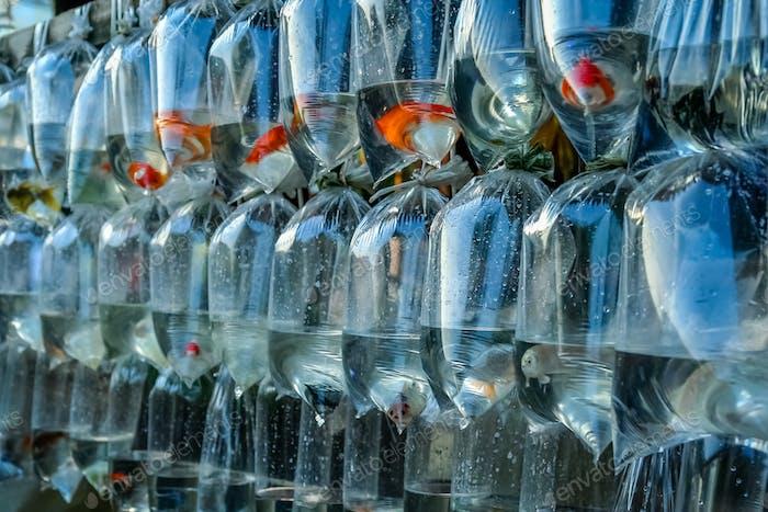 Farbige winzige tropische Fische zum Verkauf