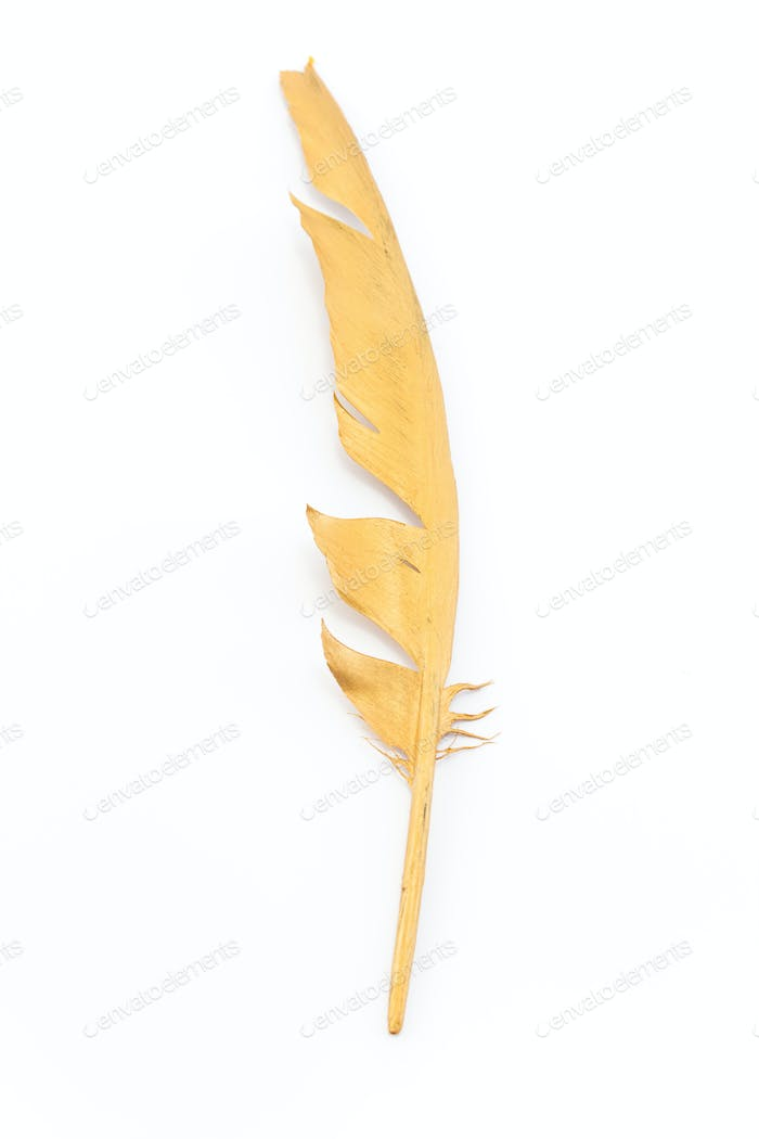Gold feather isolated on white