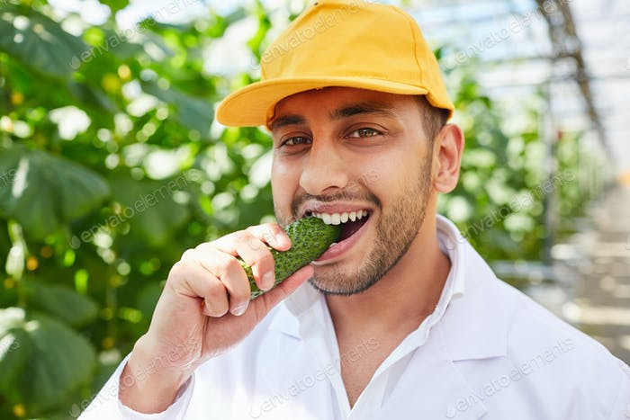 Eating fresh cucumber right off vine