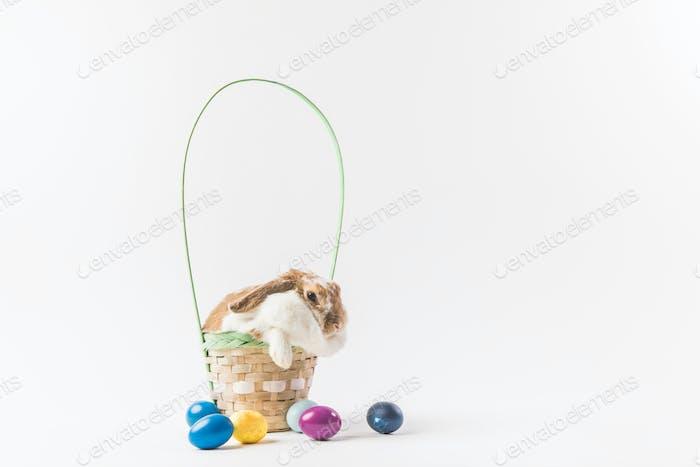 Osterhase sitzt im Korb mit bemalten Eiern, Oster