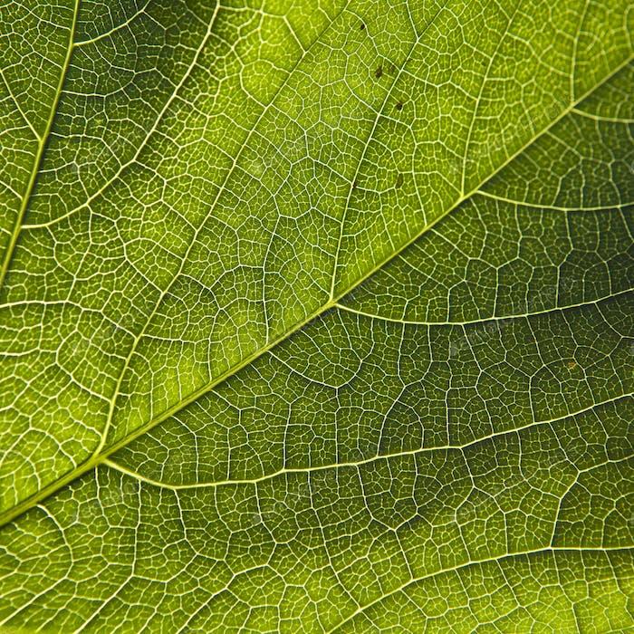 Grünes Blatt Nahaufnahme