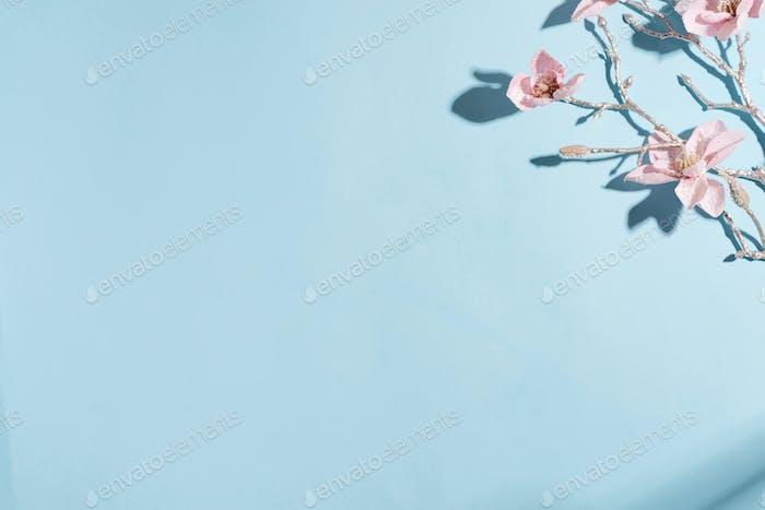 Grußecke Komposition aus Zweig der frischen Orchidee Blume mit harten Schatten auf einem hellblauen