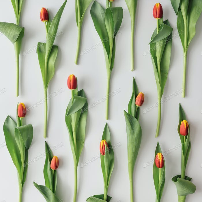 Creative arrangement of spring tulips on bright background. Flowers flat lay.