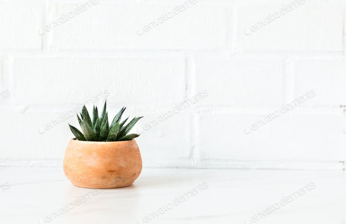 Cactus in a pot on white background.Minimalism concept.