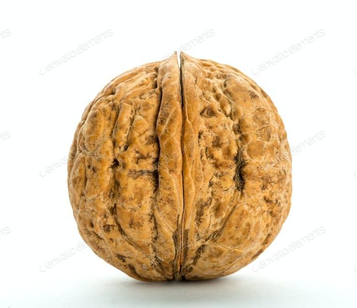 Closed big walnut
