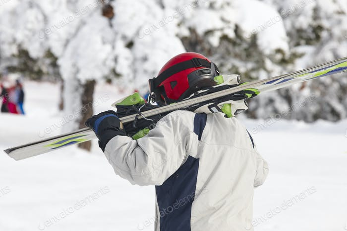 Skier carrying skis on a snowy forest landscape. Winter sport