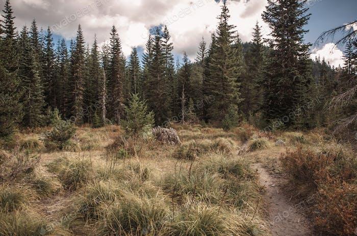 Volcano Hiking Trail