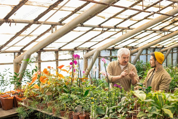 Giving advice to young worker in greenhouse