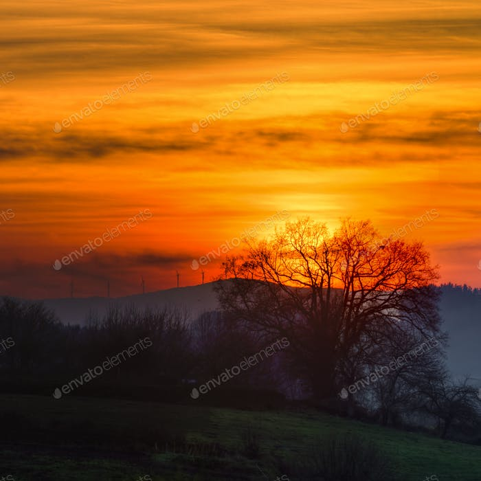 Orange sunset sky and backlight tree