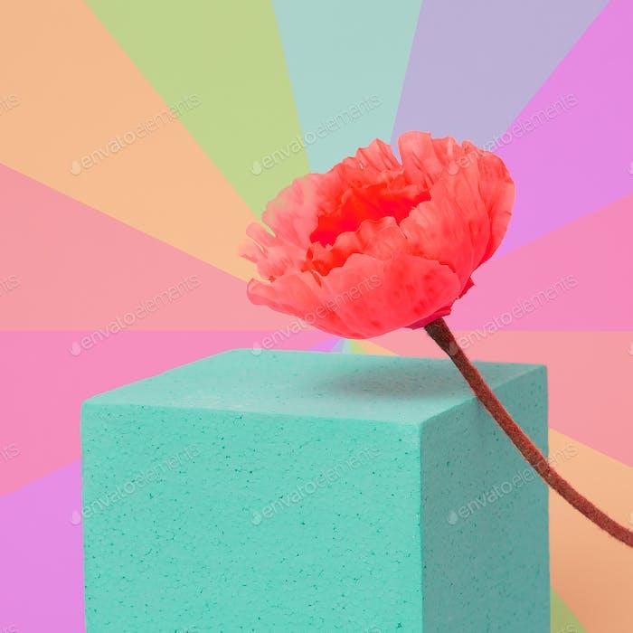 Poppy flower in colorful geometry space. Minimal art
