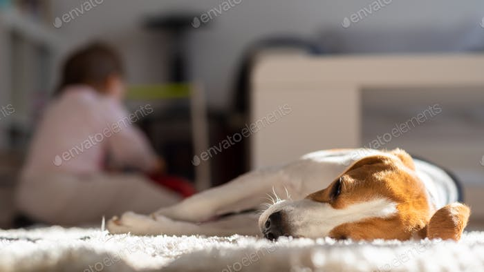 Hund müde schläft auf einem Boden. Baby spielt im Hintergrund.