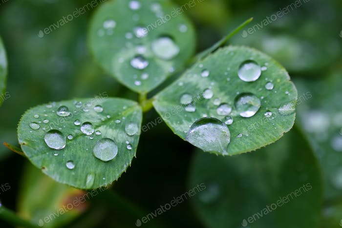 Morgentau auf der Pflanze im weichen Fokus