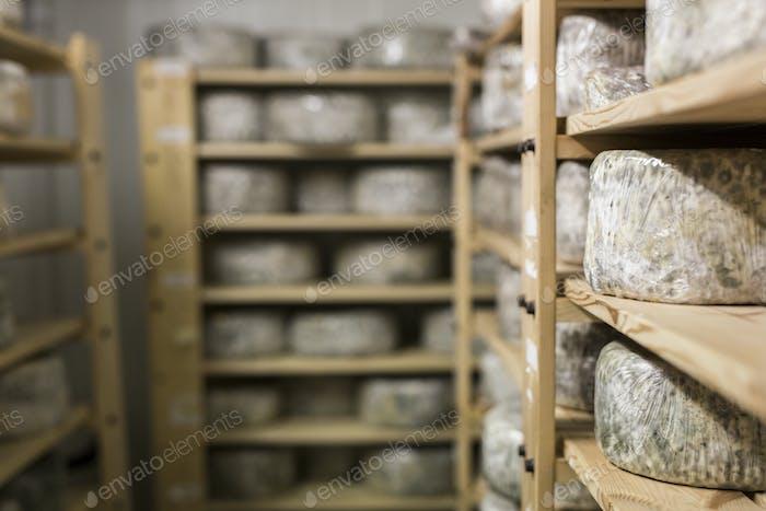 Cheese maturing on rack