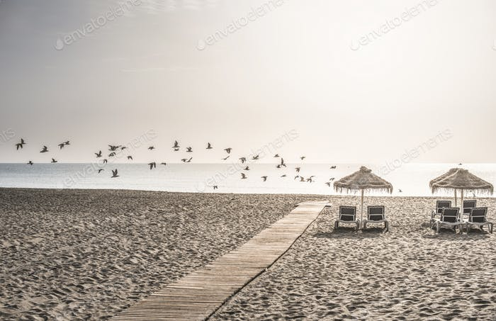 Wooden path to the beach and birds