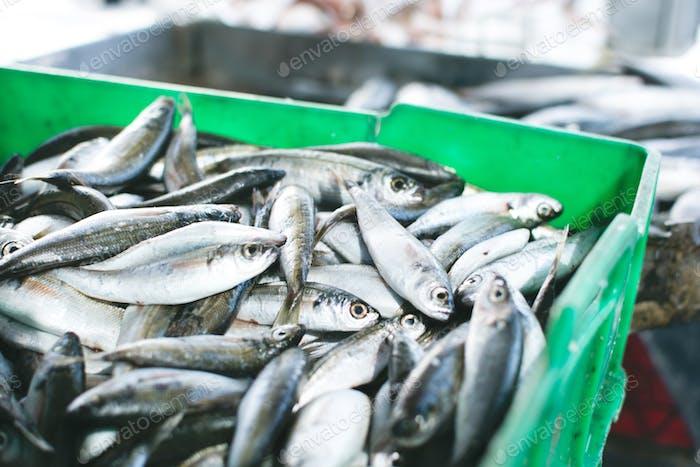 Sardinen zum Verkauf in Container