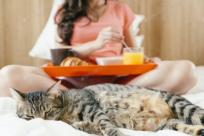 Happy woman having breakfast in her bedroom with sweet cat.
