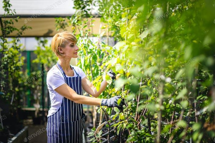 Mitarbeiter des Gartencenters beaufsichtigt die Anlagen