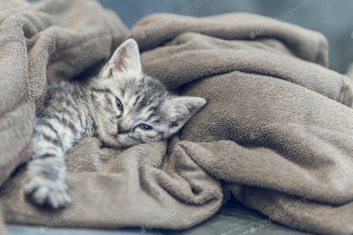 little kitten at home