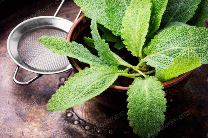 Natural medicine,herbs