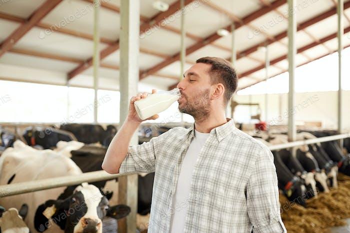 Mann oder Bauer trinkt Kühe Milch auf Milchviehbetrieb