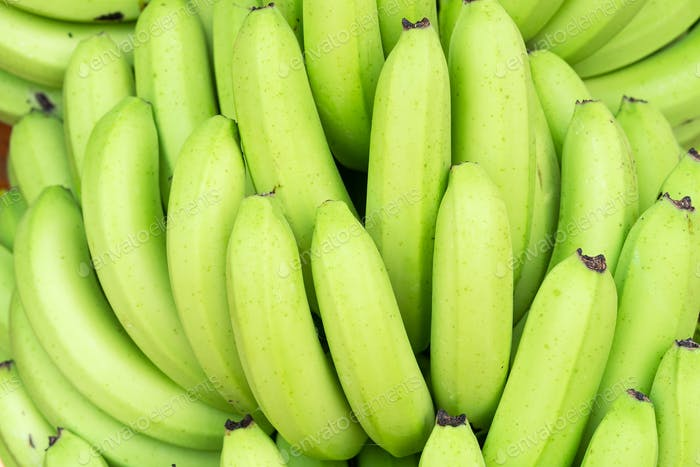 Green bunches of Cavendish banana-5