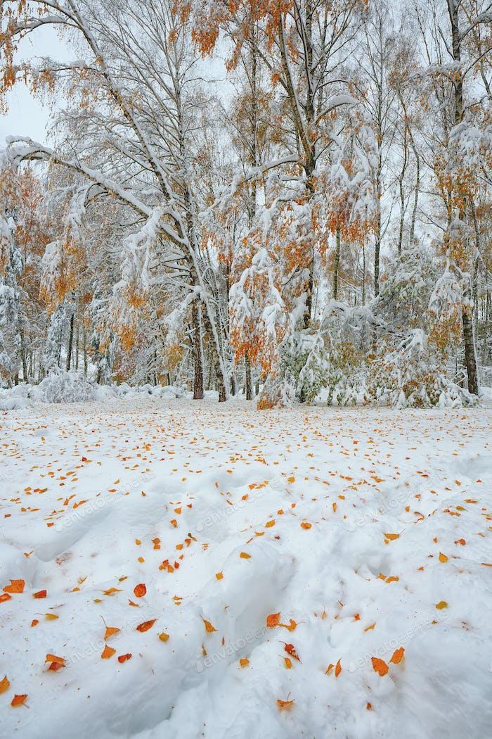 Schneebedeckte Bäume im Wald.Erster Schnee im Wald