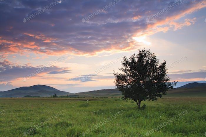 Allein Baum auf Wiese bei Sonnenuntergang mit Sonne und Nebel