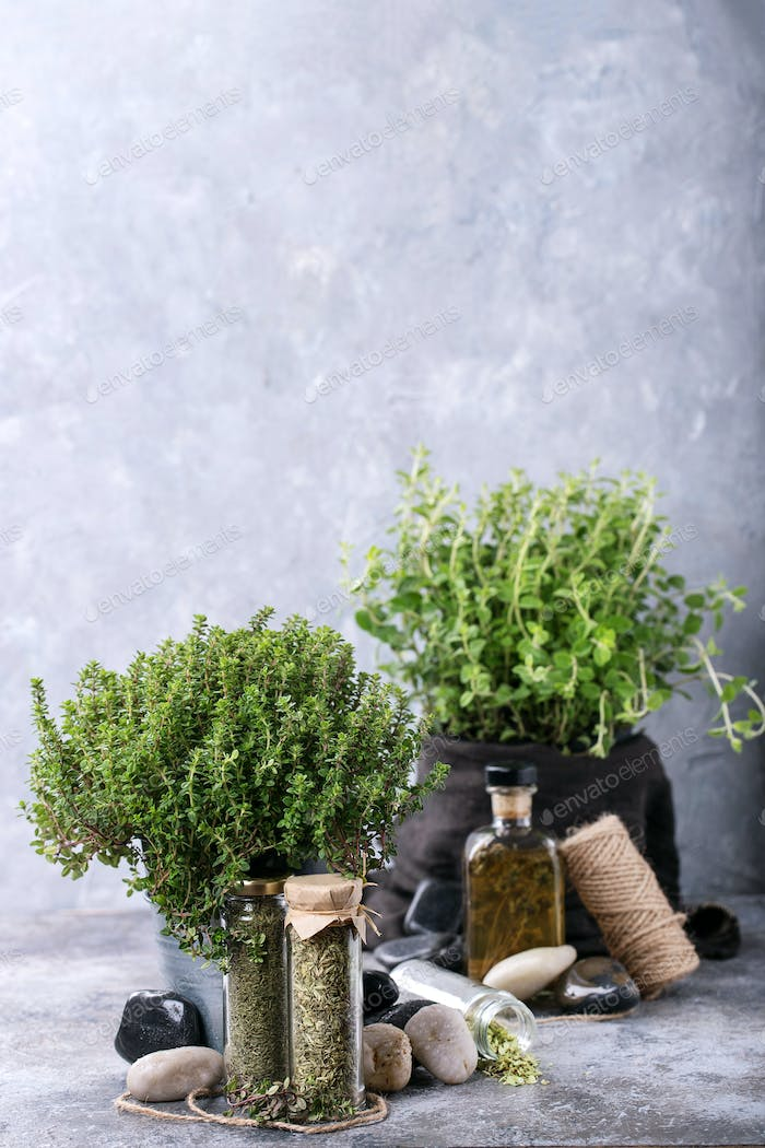 Fresh organic Oregano and Thyme